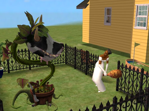 Regina, in her wedding dress, feeds the cowplant